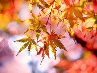 Herbstduft1
