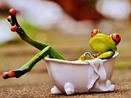 frog-1159370_1920